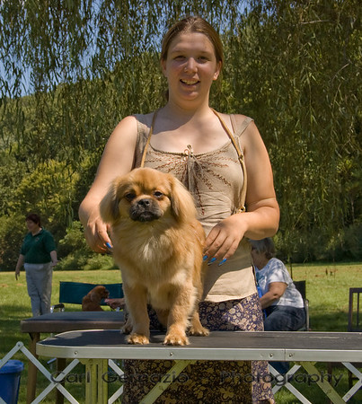 Dog Shows 2007 & 2008