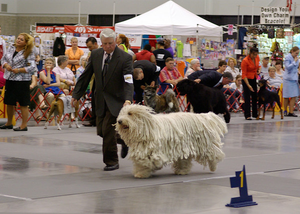 Dog Shows 2009